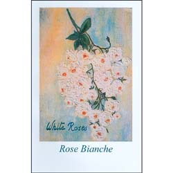 Rose BiancheWhite Roses