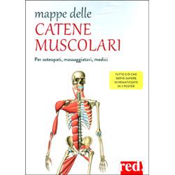 Mappe delle Catene MuscolariPer osteopati, massaggiatori, medici