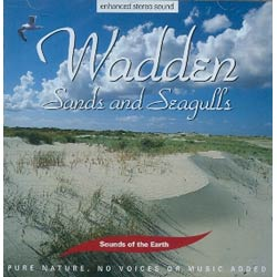 WaddenSands and Seagulls